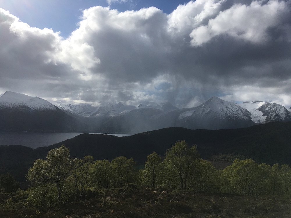 Elingar i Vartdalsfjorden