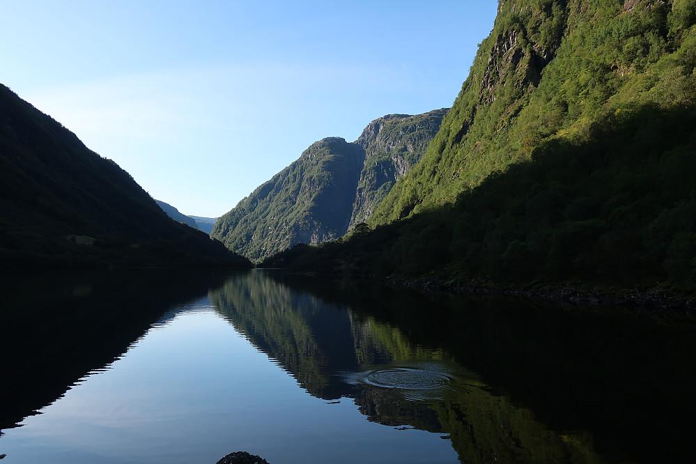 Morgenidyll ved Ommedalsvatnet. Fantastisk å sjå laksen hoppe i dette naturbildet.