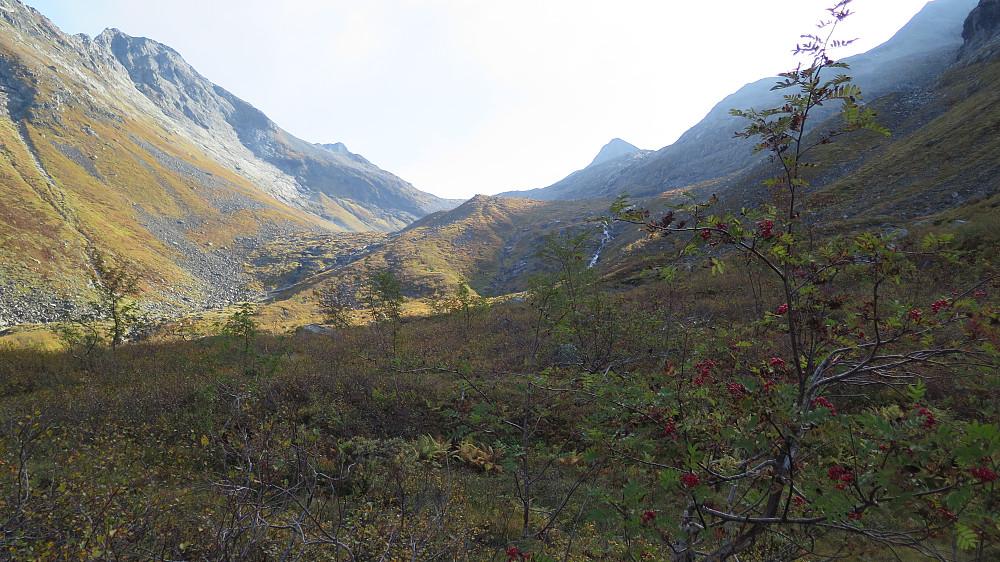 Fin tur og nydelege haustfargar oppover dalen mot Hoemskaret