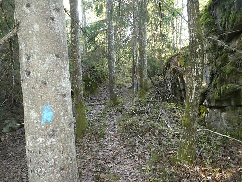 Blåmerket sti opp nesten opp til Gravtjennsåsen.