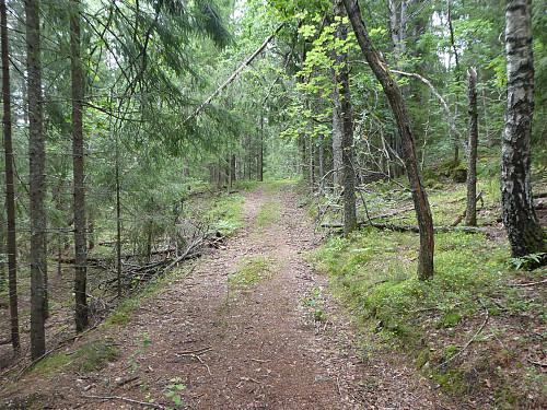 Skogsveien som jeg fulgte opp til myrområdet.