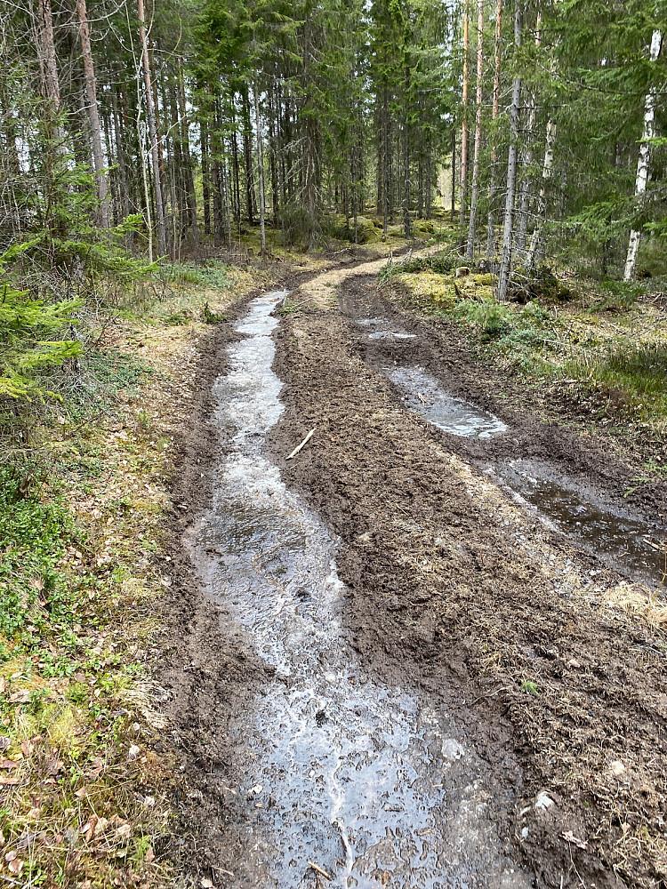 Dype traktorspor men fint å gå i midten