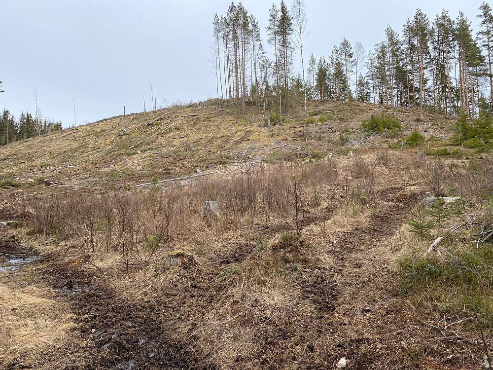 hogsfelt helt opp på toppen av Lemberget. Var lettest å gå der jeg gikk ned, på høyre i bildet og rett frem mot toppen når du kommer nedenfra.