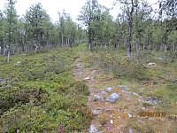 Tydelig sti i skogen