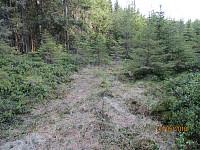 Mye tett småskog gjorde det litt krevende å gå i partier