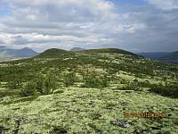 Bort mot toppen av Langbrotkollen hvor høyeste punkt er til høyre. Jeg så en elgokse på tur bort mot toppen.