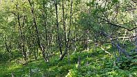 Da ble det mer nedoverbakke og over dalen i et stykke med tett skog