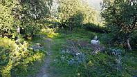 Lett å gå merket sti ned gjennom skogen