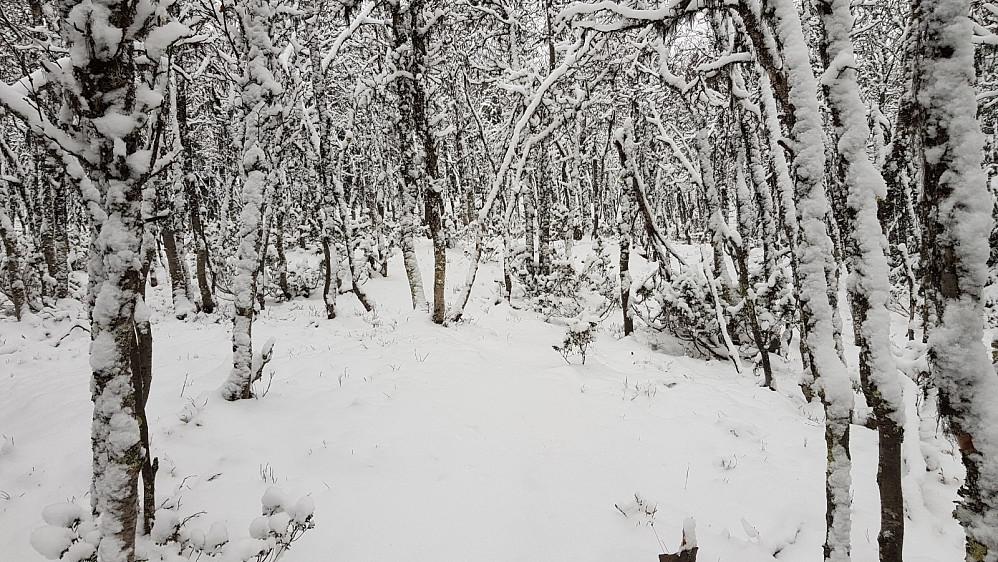 Selv om stien delvis var borte under snøen, klarte jeg å følge den til toppen