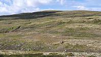 Veldig lett å gå opp på Storfjellet, da det var mye gressmark