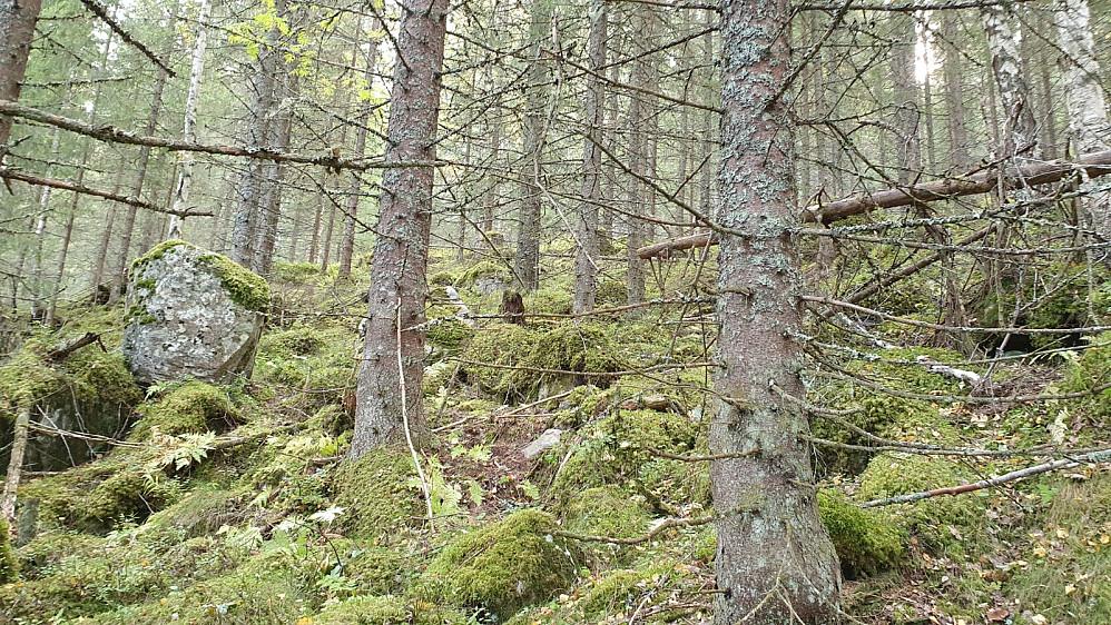 Ikke helt lett å gå opp her, men slik er det på disse lite besøkte skogstoppene