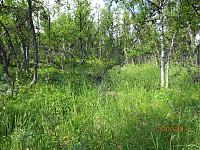 Høyt gress i skogen opp mot Reinsjøhaugen
