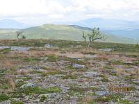 Fra Reinsjøhaugen og mot Skruvdalstinden som er turens neste topp