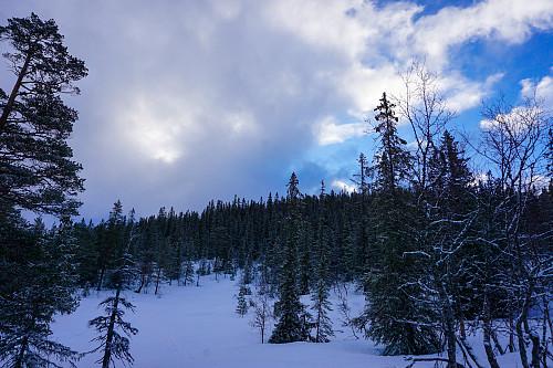Tett skog ned fra Himingen