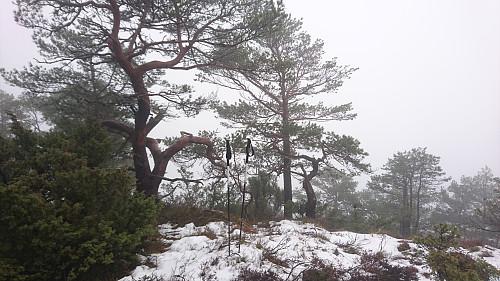 Toppen av Kampestølsrusta, 420 moh.