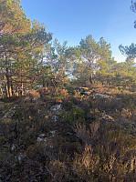 Ref. forrige bilde. Her er de sørgelige restene av en gravrøys fra jernalderen.