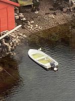 De som drøyer lenge med å øse båten gir i hvert fall måkene mulighet for en spa-opplevelse.