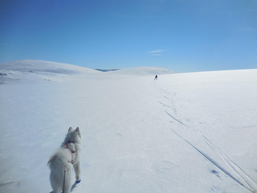 Oppe på Storbreen i retning 2 gråhøer, 2014 til venstre og dagens turmål til høyre.
