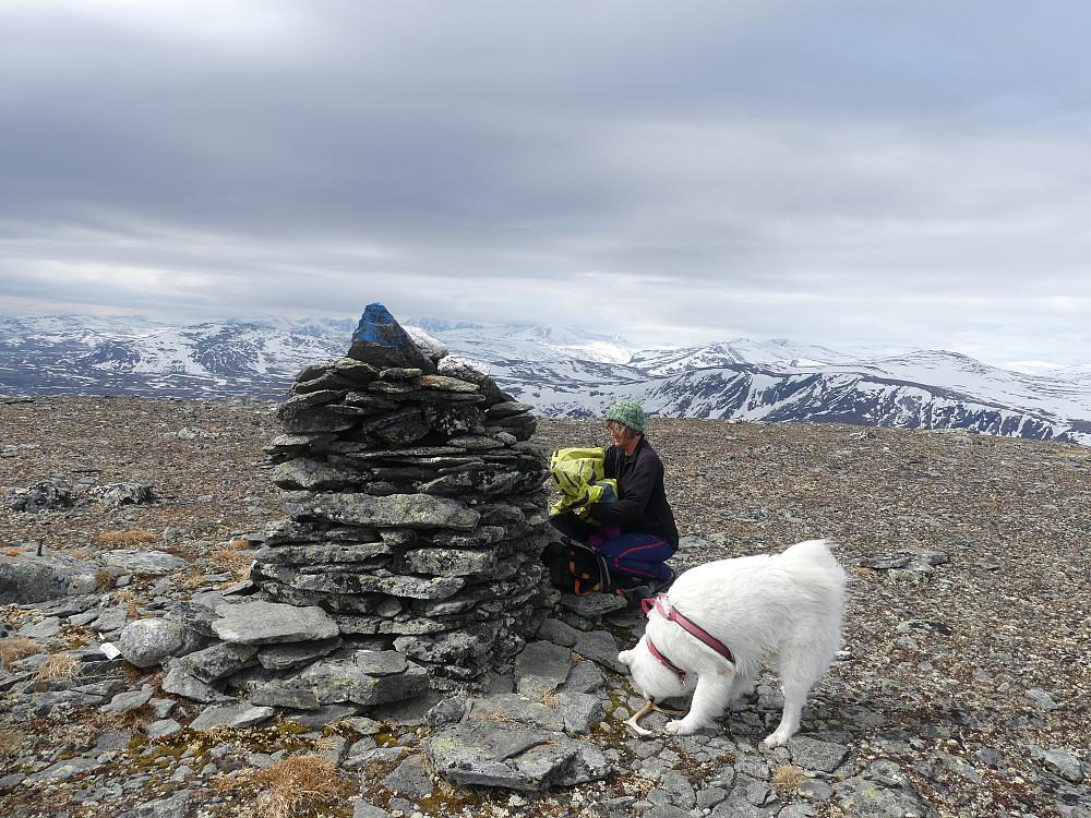 """På Nørdre Knutshøa, 1684 moh. Anton har funnet seg et """"tyggegevir."""""""