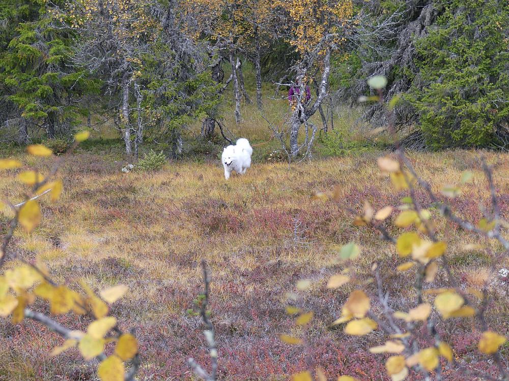 Ut av gammelskogen i Turtroa naturreservat.