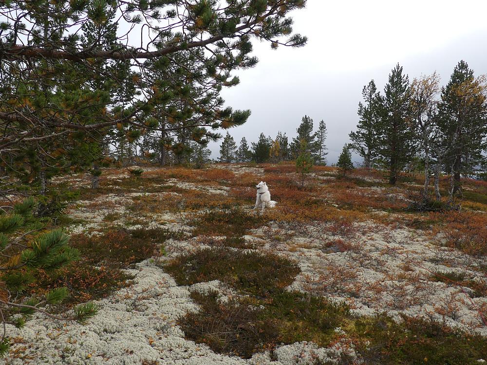 Anton på Volkampen, 832 moh.