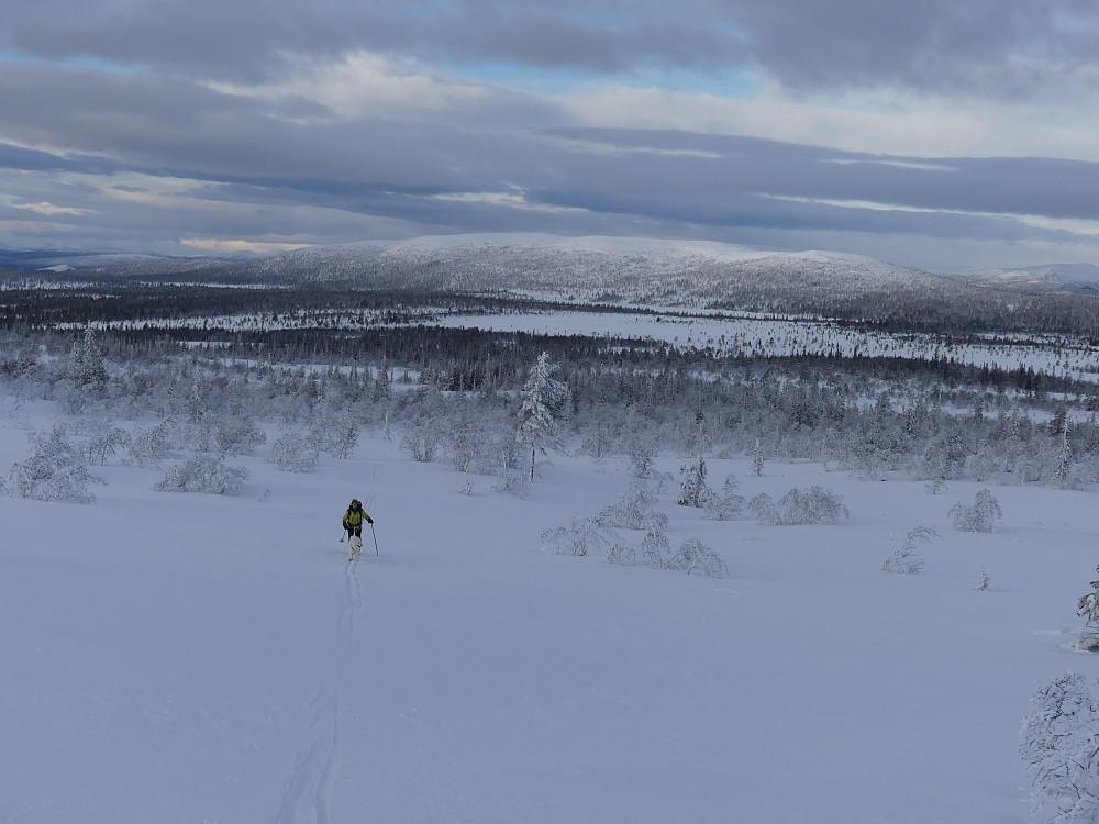 Fjellbjørkeskogen er unnagjort og skiføret blir bare bedre og bedre. Renåfjellet i bakgrunnen.
