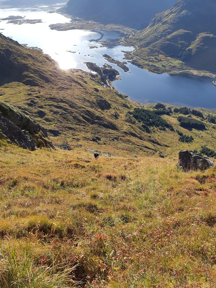 Bratt opp fra Rolfsfjord