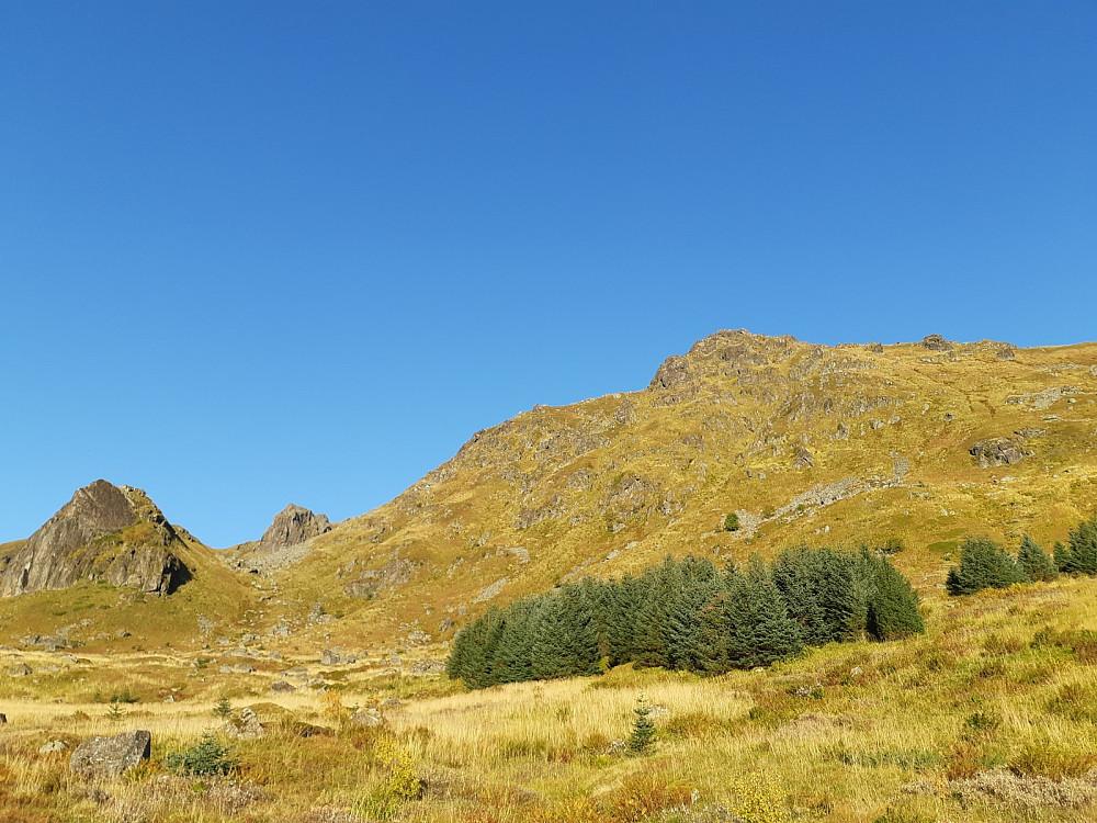 Her kan man gå til vestre i bildet og så renne opp til høyre (sees ikke på bildet), eller forbi grantrærna og opp til høyre i bildet, noe vi gjorde