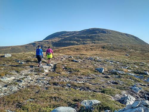 På vei over Rønstadheia i retning Lepsøyfjellet, som altså heter Goaldet.