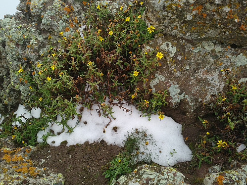 #32: We even found some snow on the top of Mount Dashen.