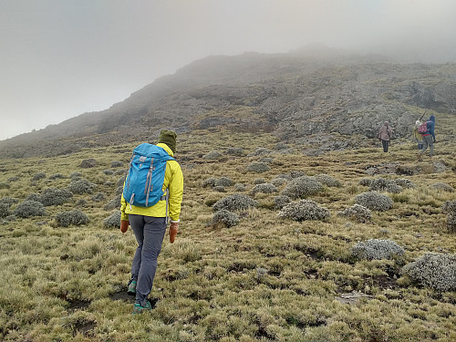 #56: A fascinating vegetation as we embarked upon the climb towards the top of Mount Silki, the mountain still enshrouded in mist.