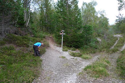 Her tar sommer-stien til Grindaflethytten av fra skogsveien