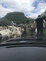 På vei opp til parkeringen på Bygdastølen. Fjellet Hesten midt i mot. Vi hold til høyre for fjell hammerene på vei opp.