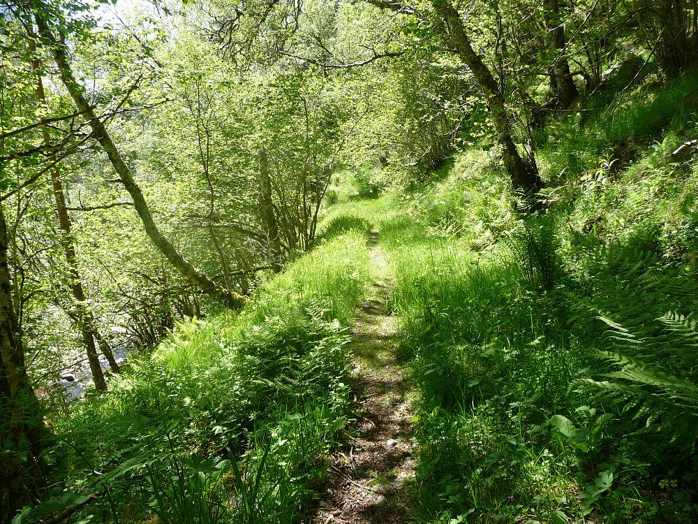 Stien langs skogsveien ned mot parkeringa