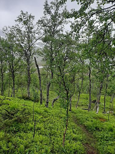 Opp skogstien