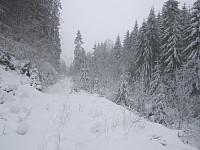 Skogsveien tilbake mot parkeringen