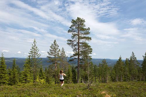 Skogen åpner seg nær toppen, og gir utsikt sørover og østover.