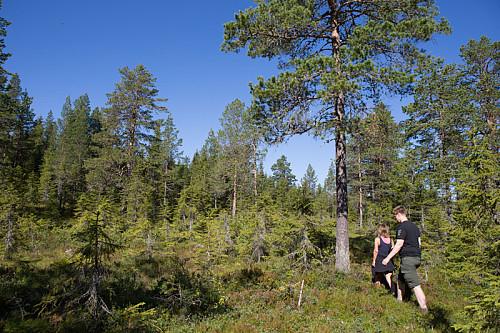 Noen få partier med fin skog. Ellers for det meste plantet gran.