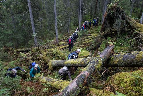 Hakaskallen blir skogkommunen Elverums første (!) barskogsreservat. Her ser vi litt av grunnen. Urskogslignende miljø.