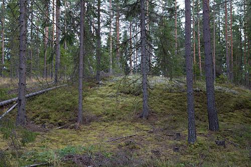 Slik ser Svartholtets høyeste punkt ut. De fleste kaller det Høyhaugen.