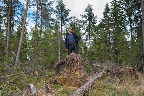 På toppen av toppen. Vindfall preger Høyhaugen.