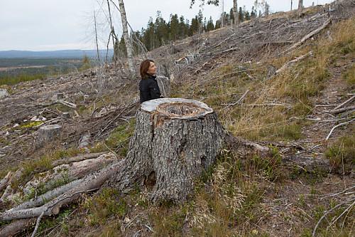 Storskogen i Bråtaseterberget er en saga blott. Statskog hogger hardt.