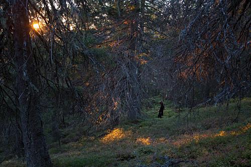 Kveldsskog i Hemberget.
