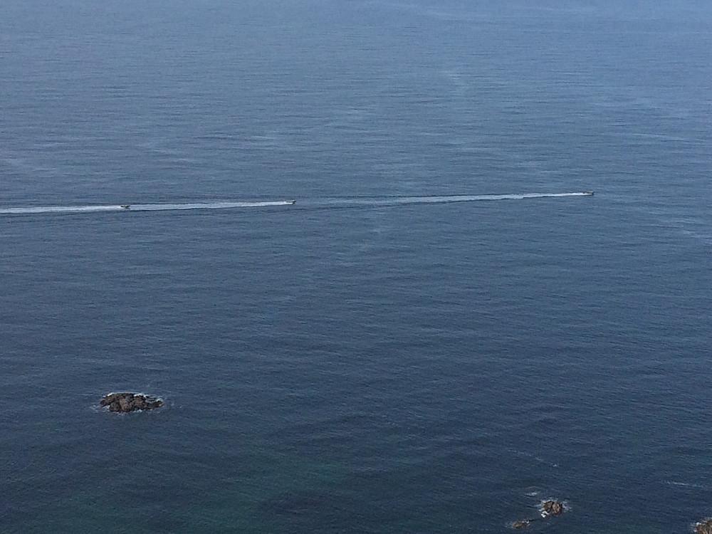 Resten av kursdeltakerene valgte hvalsafari.