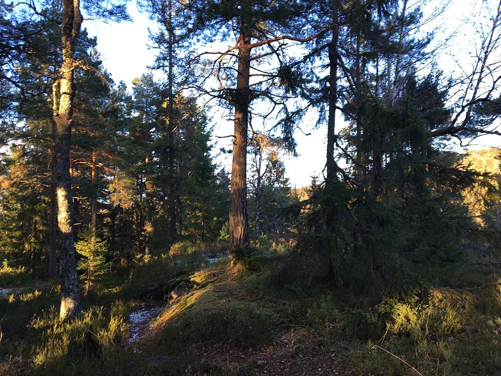 Lille Kolsås. Skogstopp