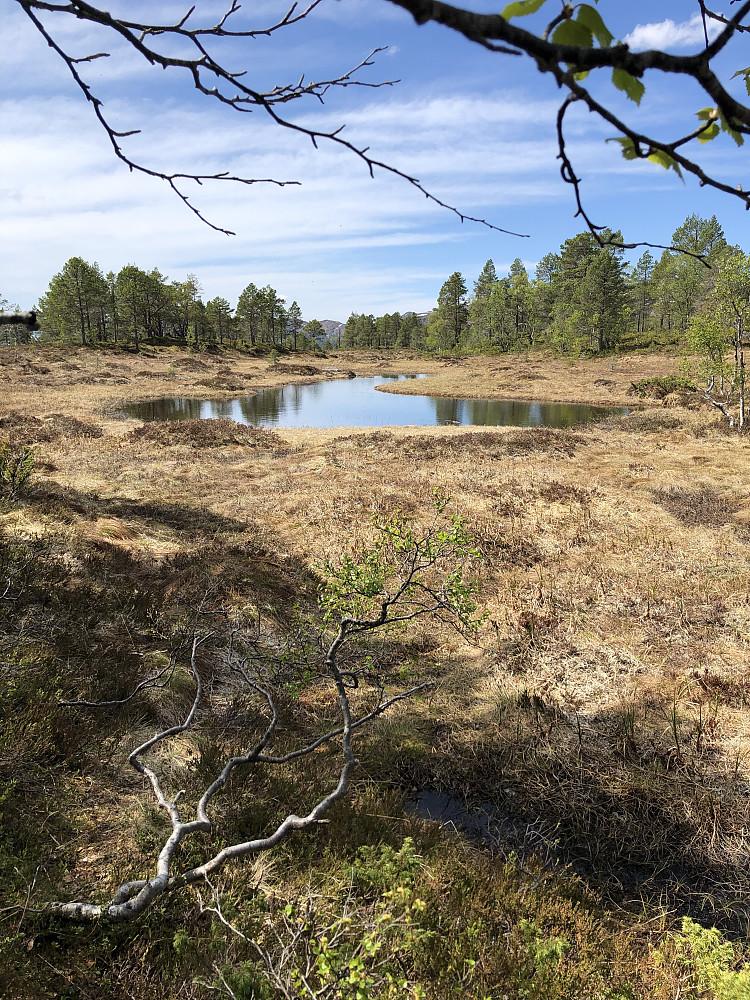 Fint i Moldemarka også på sommeren.