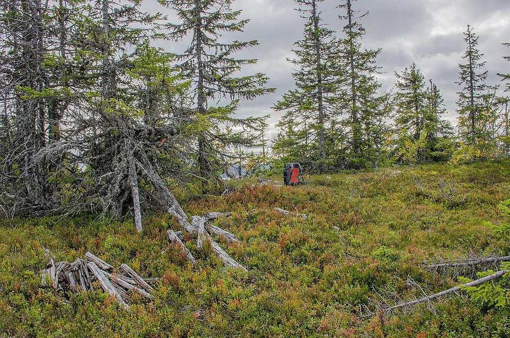 Tilsetfjellet toppen 835 moh med nedrast trigpunkttårn