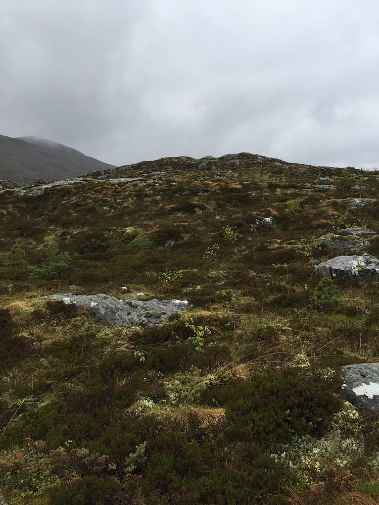 Stien går ikke til Hillehornet. Derfor må man på et tidspunkt ta av og gå mot det naturlig høyeste punktet langst stien. Her er et bilde fra omtrent der jeg tok av.