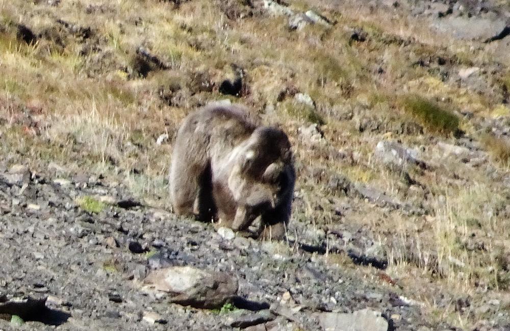 Siden vi bare var 2-3 kilometer fra Russland regner mi ved at det var en russisk bjørn.