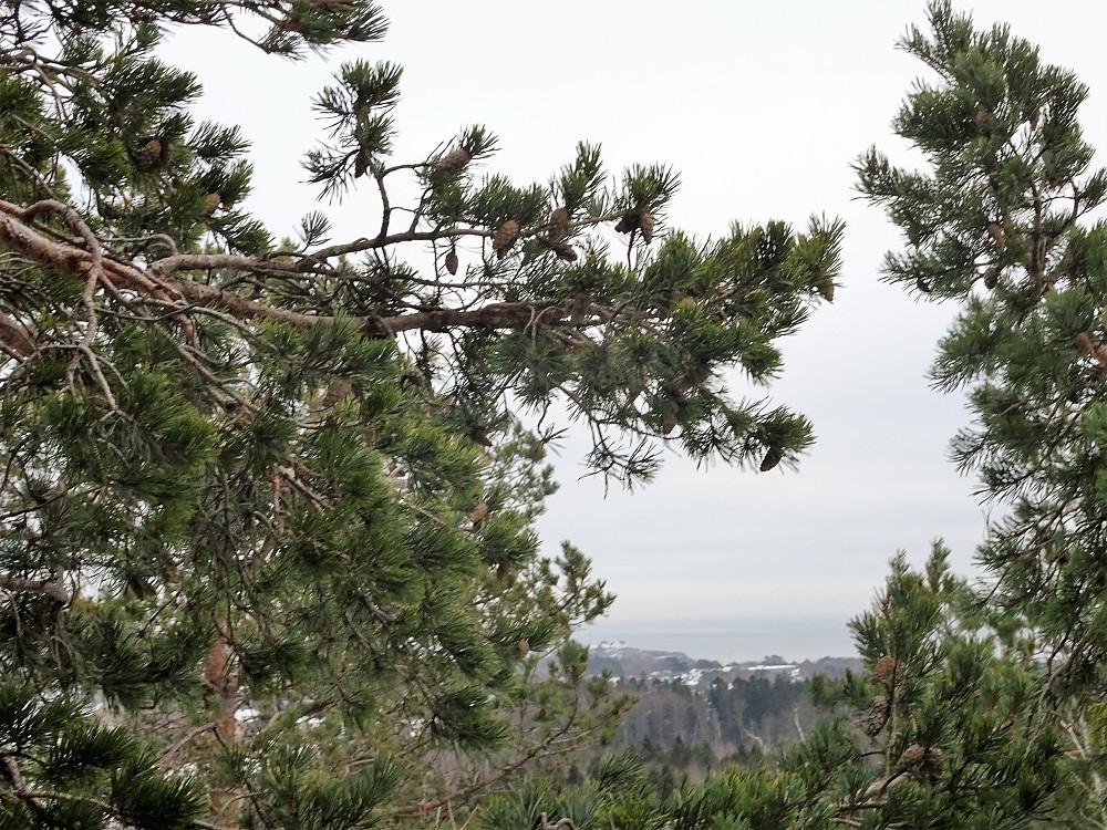 Utsikt øst mot Stavern sentrum